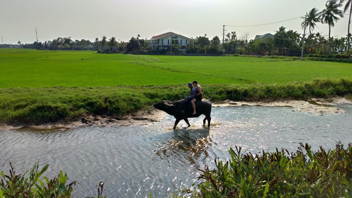 Hoi An Buffalo Riding, Basket Riding and Cooking Class from Da Nang city